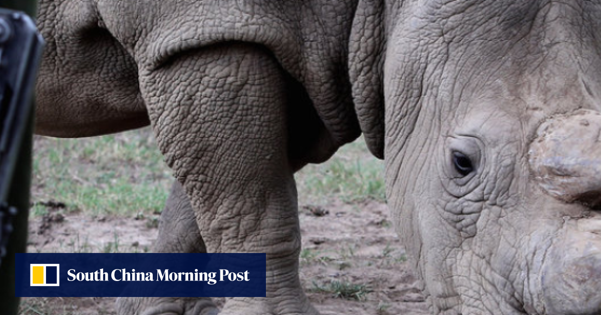 44a0c3ebef7 An American biotech start-up is trying to end poaching by flooding ...