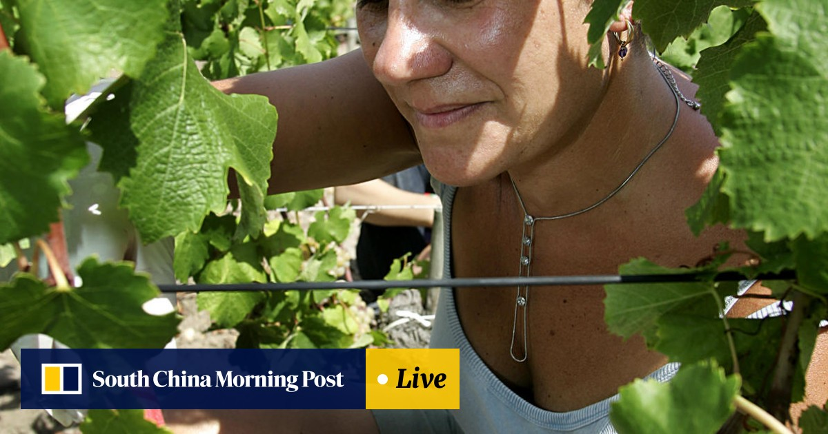 Asian Grapevine   South China Morning Post
