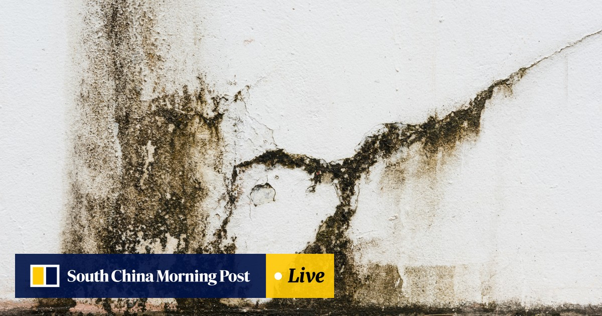 Mould Busters Battle Hong Kong S Humidity With Our Experts Tips South China Morning Post