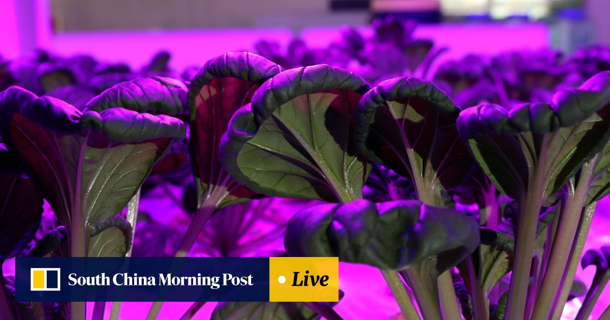 Farming 4 0': in space-starved Hong Kong, the future of