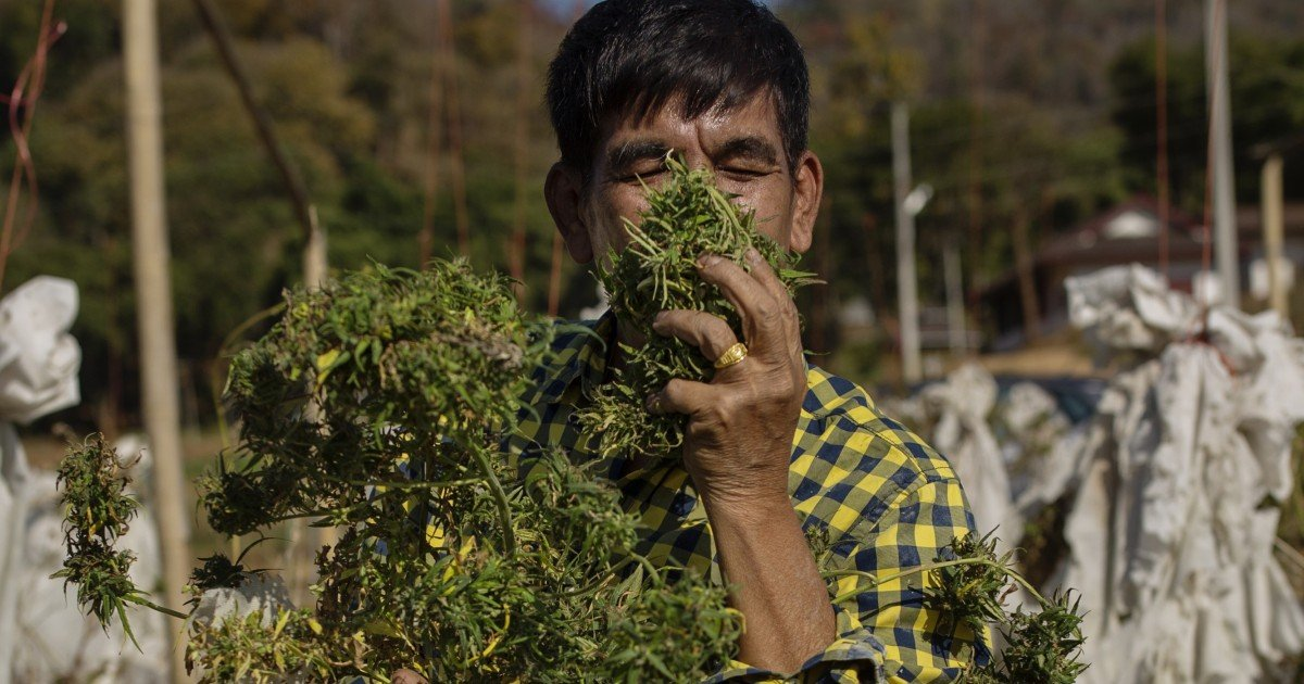Could Thailand, which gave world the bong, legalise cannabis