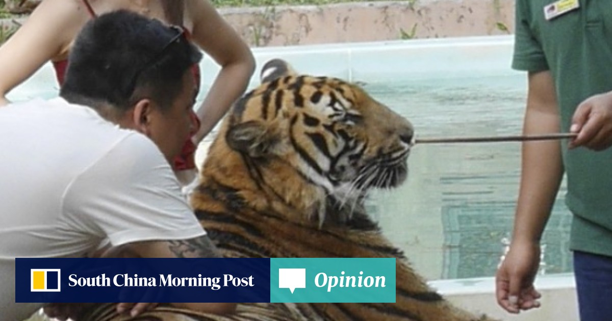 0599dae9b9d Tiger selfies  Chinese