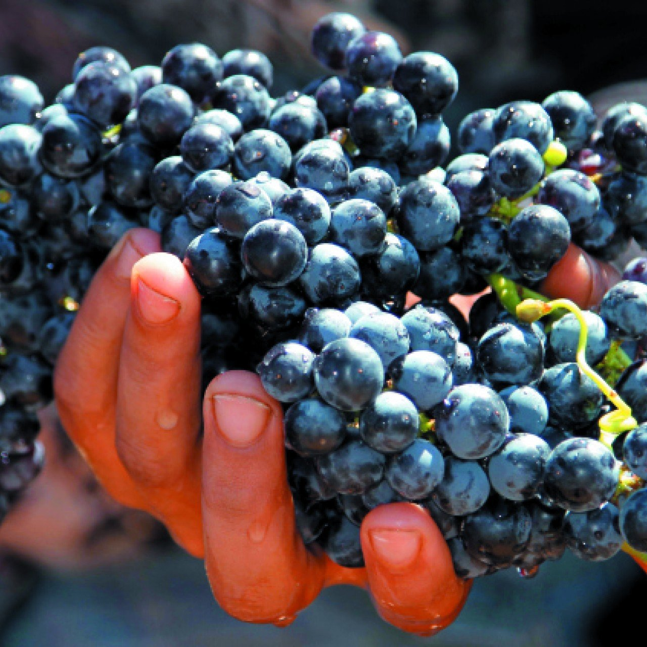 Winemaking in the Middle East enjoys a long history, but the