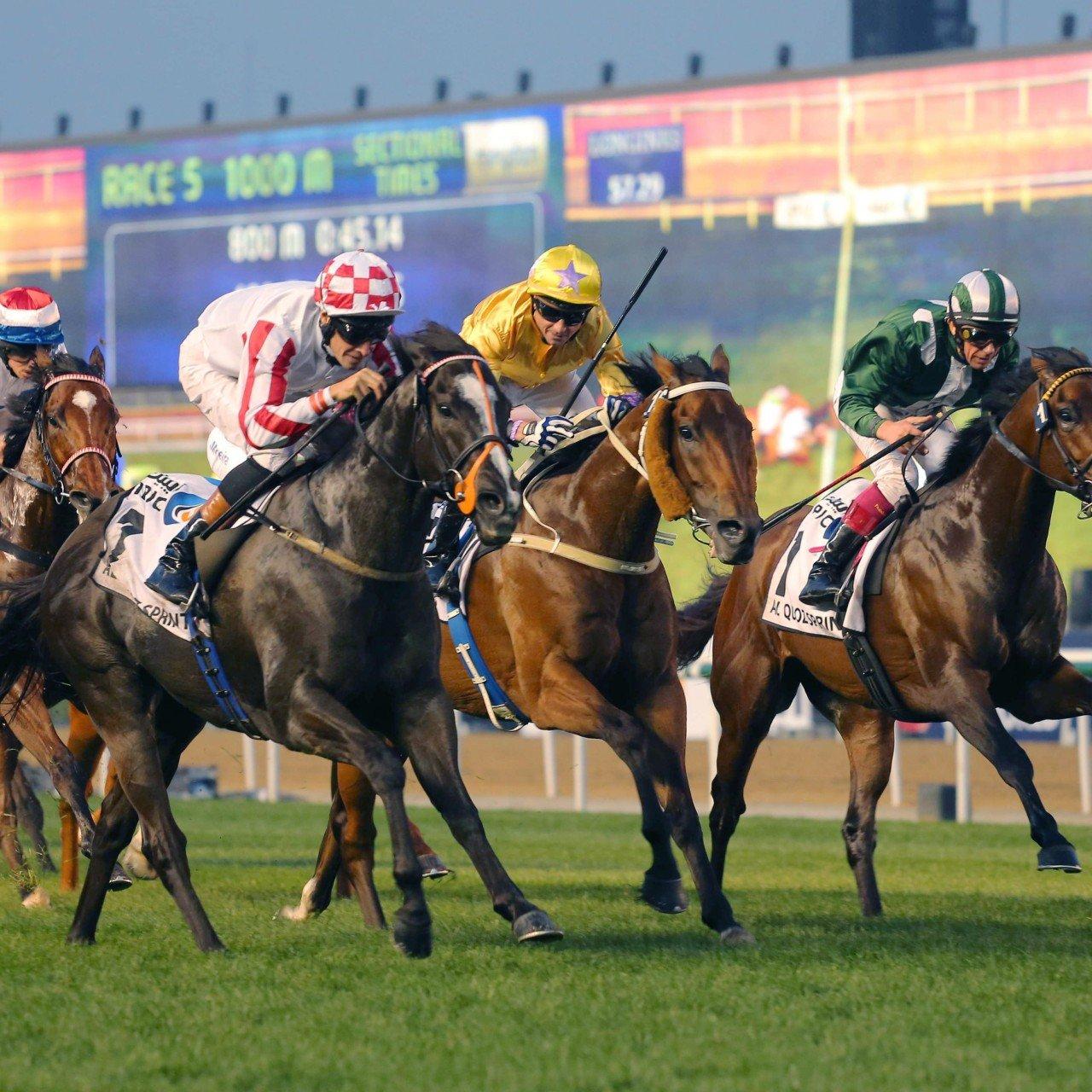 How to bet on horse racing in dubai sport betting bonus