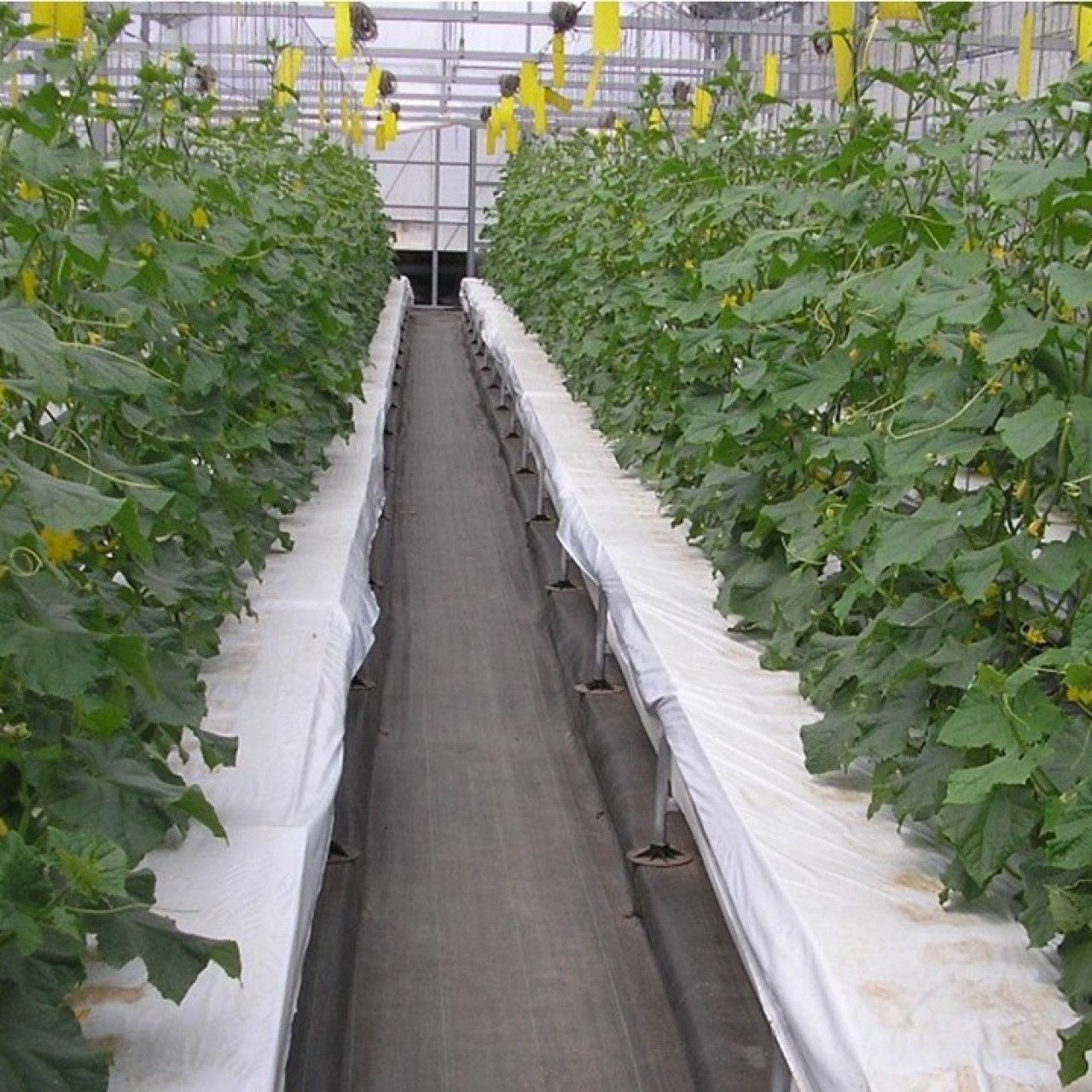 Farming without soil: new Japanese tech makes growing fruit and