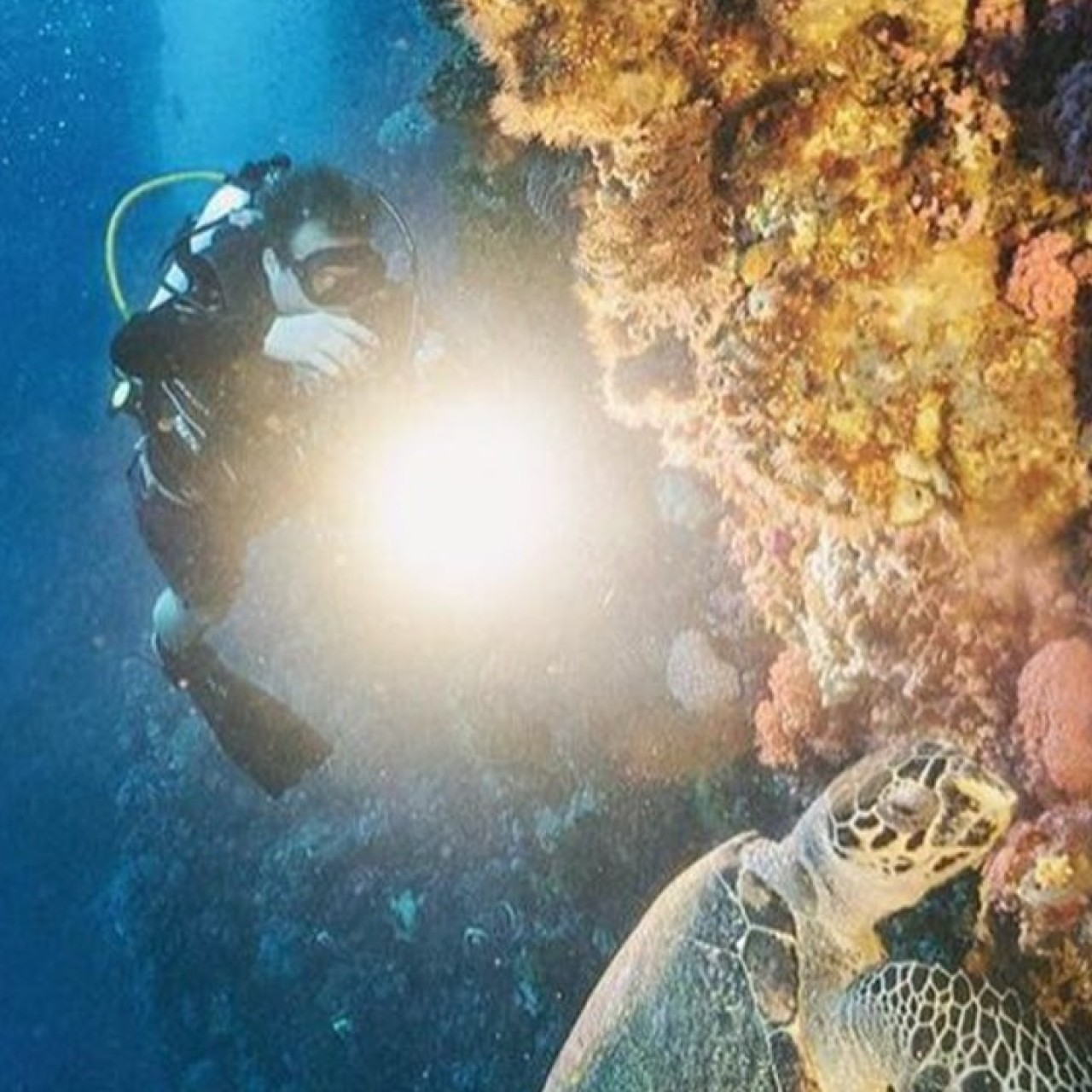 7 top diving sites in Asia that offer underwater thrills of a