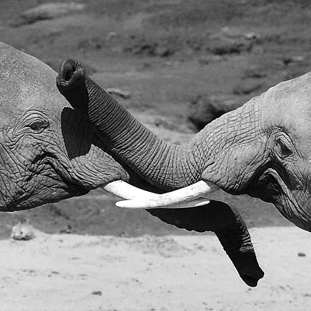 195768a781a2 Saving rhinos  South Africa s fight against Chinese demand for horns that s  pushing species to extinction